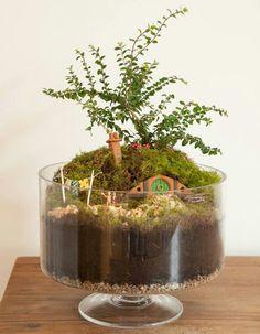 Mini jardín del hobbit