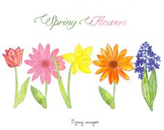 CLIP ART Spring Flowers - for commercial and personal use