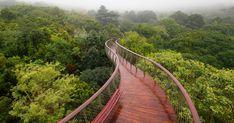 Image 9 of 31 from gallery of Kirstenbosch Centenary tree canopy walkway / Mark Thomas Architects. Photograph by Adam Harrower Mark Thomas, Backyard Canopy, Garden Canopy, Canopy Outdoor, Canopy Lights, Tree Canopy, Canopy Tent, Window Canopy, Fabric Canopy