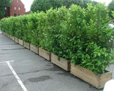 Screening plants in planters to contain growth when dealing with bamboo hedges Privacy Planter, Garden Privacy, Fence Planters, Backyard Privacy, Garden Shrubs, Balcony Garden, Planter Boxes, Backyard Landscaping, Planting For Privacy