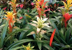 Escape the chill of winter by going on a mini-vacation in your own home with tropical houseplants. Popular tropicals such as Peace Lilies, Rabbit's Foot Ferns, and orchids will bring a warm oasis of color indoors that even the most novice gardener can keep happy until spring.