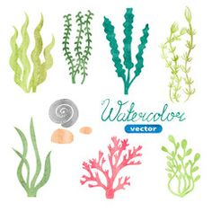Seaweed clipart watercolor - pin to your gallery. Explore what was found for the seaweed clipart watercolor Underwater Plants, Underwater Painting, Plant Painting, Plant Drawing, Aquarium Drawing, Free Cliparts, Sea Plants, Aquarium Backgrounds, Ocean Themes