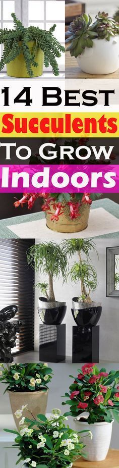 Unique looking succulents can make your rooms look better, also, they are low-maintenance and easiest plants to grow. Check out the 14 best indoor succulents for your home! Unique looking succulents can Growing Succulents, Cacti And Succulents, Growing Plants, Planting Succulents, Planting Flowers, Succulent Gardening, Cactus Plants, Plantas Indoor, Indoor Vegetable Gardening
