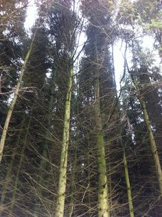 trees, at the bottom of Pen y fan mountain in Wales Wales, Photographs, Mountain, Fan, Illustration, Plants, Welsh Country, Photos, Illustrations