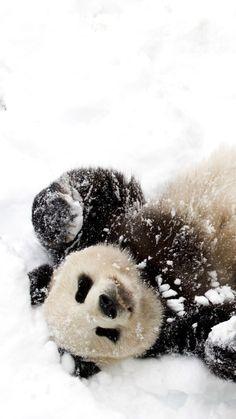 Snow pandas ☆