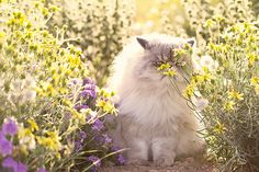 Take some time to stop and smell the flowers :-)