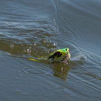 How to Fish (Retrieve) Bass Fishing Lures