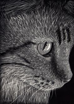 Scratchboard art, drawing of a cat by Lynn Kibbe. Posted on The Art Colony.