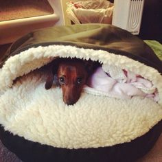 Dachshund bed snoozer Cozy Cave pet bed perfect for mamas dog and Nancys http://@Nancy Kay
