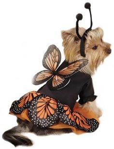 Zack Zoey Monarch Butterfly Costume SMALL Zack & Zoey http://www.amazon.com/dp/B00EZYJ1ZM/ref=cm_sw_r_pi_dp_0DPaub0D6J2AB