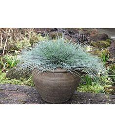 stella de oro daylilies, blue fescue, lavender landscape, Gartenarbeit ideen