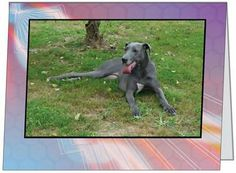 "Note Cards support Harlequin Haven Great Dane Rescue! Cards are 5.47x4.21"" folded, blank on inside, w/ envelope. Mix & match from 9 designs. .50 each. http://hhdane.org/howtohelp/note_cards.htm"