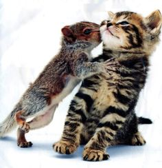 Kitten and Squirrel kissing