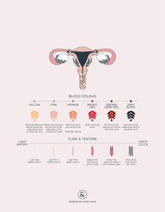 Uterus Anatomy - Designs by Duvet Days Anatomy Illustrations