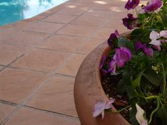 Eden Range Paving from Stonemarket (Pty) Ltd, South Africa. Pool Coping, Best Web, South Africa, Range, Plants, Design, Cookers, Plant