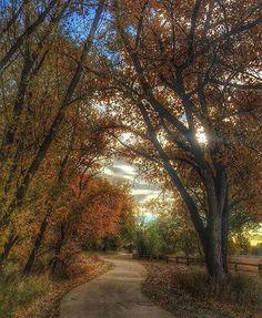 An Autumn path!