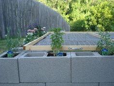 tortoise habitat ideas   next step is to plan some tortoise friendly plants