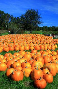 Emory Farm, Durham, New Hampshire