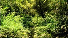 Tropical Rainforest IMAX  HD