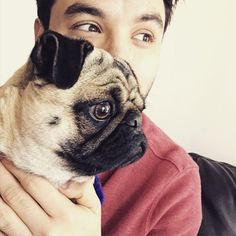 Love Pugs, French Bulldog, Cute Animals, Actors, Instagram, Singer, Screens, Artist, Pretty Animals
