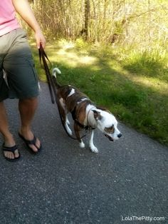 Loose Leash Walking: Putting an End to Leash Pulling