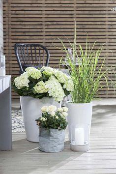 Disse 7 plantene tåler fint å stå i skyggen   Stelletips fra Mester Grønn Planters, Outdoors, Gardening, Ideas, Patio, Lawn And Garden, Plant, Window Boxes, Outdoor Rooms