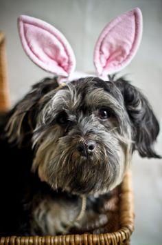 Easter feeling