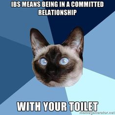 Chronic Illness Cat. IBS means being in a committed relationship with your toilet. So does IC.