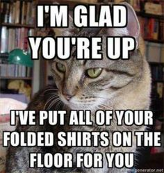 humor memes Cats are cute and sometimes unintentionally do stupid funny things, so we have collected some the funniest and most hilarious cat memes and pictures hope you will enjoy em. Funny Animal Pictures, Funny Animals, Cute Animals, Animal Funnies, Animal Memes, Humorous Pictures, Funniest Animals, Humorous Quotes, Funniest Pictures