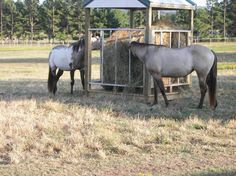Horse Hay Feeders Plans | My hubby built this to save on waste.