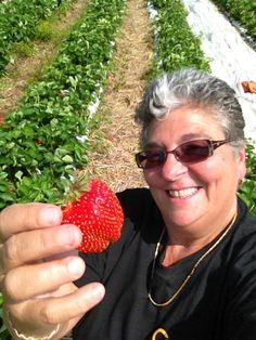 Picking Strawberries - May 2012