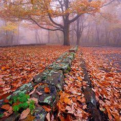 enchanting-autumn:  Foggy Fall Fun. by BamaWester on Flickr.