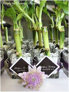 Bamboo wedding favors, also a centerpiece! a good luck charm! crafty!!