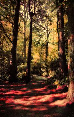 Fantasy forest 2 by *CathleenTarawhiti on deviantART