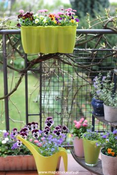 wiosna, spring Spring, Plants, Balcony, Plant, Planets