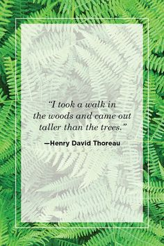 53 Beautiful Quotes About the Power of Nature