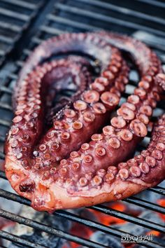 Octopus Recipes, Fish Recipes, Appetizer Recipes, Sweet Recipes, Appetizers, My Favorite Food, Favorite Recipes, Creative Food Art, Calamari