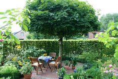 Wer einen Baum direkt neben einem Sitzplatz einplant, kann sich im Sommer über wohltuenden Schatten freuen