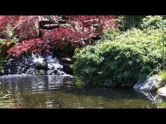 Lotus Pond, Beautiful World, Thoughts, Videos, Nature, Naturaleza, Nature Illustration, Off Grid, Ideas