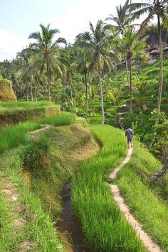Ubud, Bali, Indonesi
