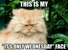 "15 Funny Wednesday Memes - ""This is my ""It's only Wednesday"" face."" # wednesday Humor 15 Funny Wednesday Memes to Make Your Hump Day a Little Better Funny Wednesday Memes, Wednesday Hump Day, Happy Wednesday Quotes, Wednesday Coffee, Wacky Wednesday, Monday Thursday, Wonderful Wednesday, Funny Hump Day Memes, Happy Friday"