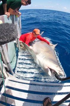 Giant Bull Shark Surprises Researchers