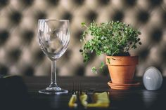 MrNickHook-Photography-Zucchini-0140.jpg