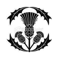 Thistle symbol, maybe appliquė? Scottish Thistle Tattoo, Stencils, Illustration Blume, Wood Carving Patterns, Leather Carving, Celtic Art, Celtic Designs, Silhouette Vector, Line Drawing