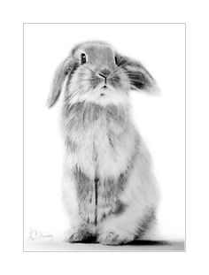 #bunny a cute rabbit by Aytac Dncctn