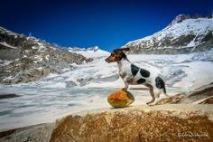 Rhonegletscher Decoration, Istanbul, Seasons, Mountains, Dogs, Nature, Travel, Decor, Naturaleza