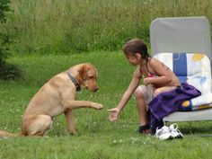 Ein Hund richtig erziehen: Top 10 Tipps. Tipps von professionellen Hundetrainern helfen ihnen ihr neues Leben mit Hund zu beginnen. Erste Schritte in Hundeerziehung.