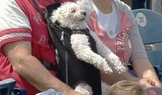 Look at his face though lol | This Adorable Dog Is Living Its Best Life At A Baseball Game