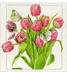 Tulip and Cabbage Butterfly - Watercolor on paper