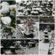 Collage de tuin van morgen in de sneeuw, 8-2-2017.